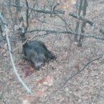 """Концесионерот """"Текстил"""" се откажал од двете ловишта во Општина Кочани ?"""